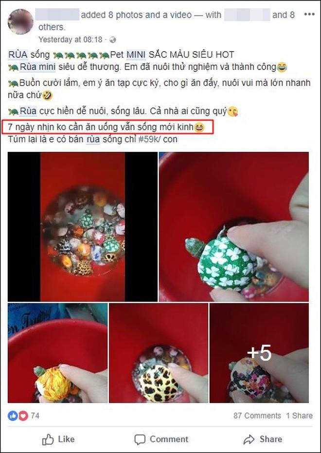 """Nở rộ trào lưu bán rùa mini sơn đủ màu trên mạng xã hội, """"Nhà Rùa học"""" Hà Đình Đức lên tiếng cảnh báo - Ảnh 2."""