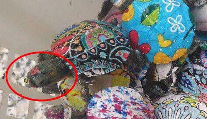 """Nở rộ trào lưu bán rùa mini sơn đủ màu trên mạng xã hội, """"Nhà Rùa học"""" Hà Đình Đức lên tiếng cảnh báo - Ảnh 8."""
