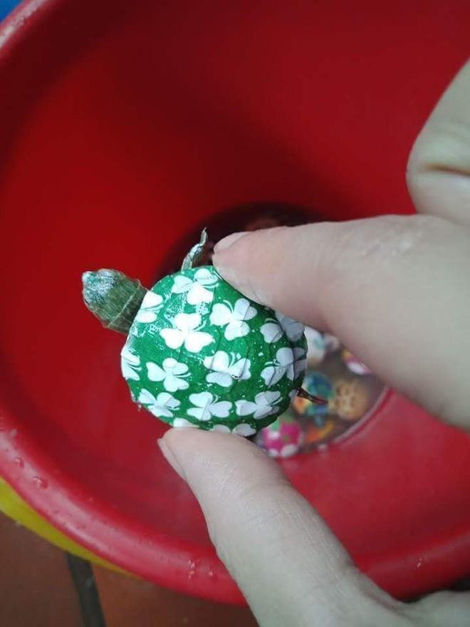 """Nở rộ trào lưu bán rùa mini sơn đủ màu trên mạng xã hội, """"Nhà Rùa học"""" Hà Đình Đức lên tiếng cảnh báo - Ảnh 3."""