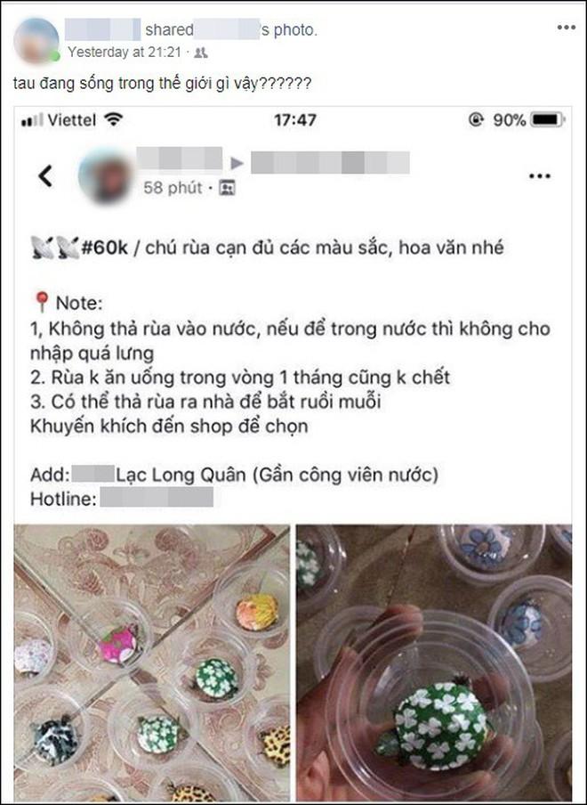 """Nở rộ trào lưu bán rùa mini sơn đủ màu trên mạng xã hội, """"Nhà Rùa học"""" Hà Đình Đức lên tiếng cảnh báo - Ảnh 6."""