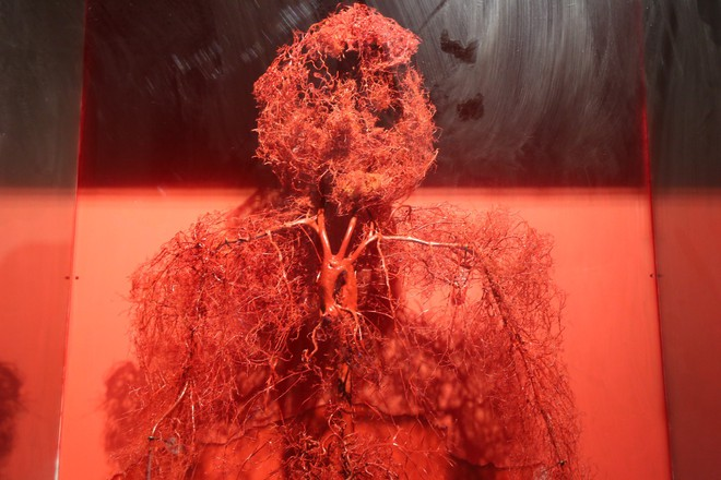 Mạch máu chảy trong khắp cơ thể người từ đầu đến chân.