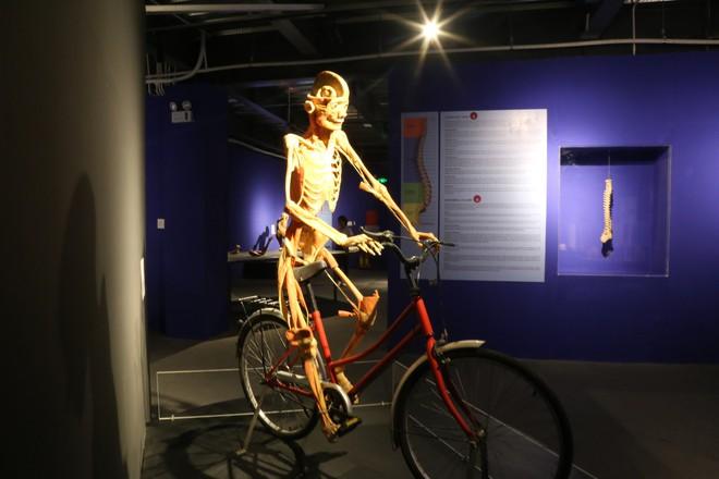 Những thi thể người thật được tái hiện qua những hoạt động chuyển động.