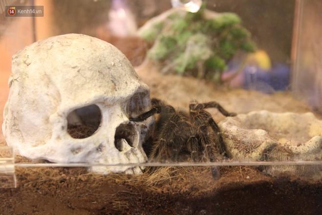 """Ông bố trẻ ở Hà Nội và bộ sưu tập những con vật """"nhìn thôi đã sợ"""": Đủ các loài rắn, nhện, ếch cho đến rồng đất - Ảnh 3."""