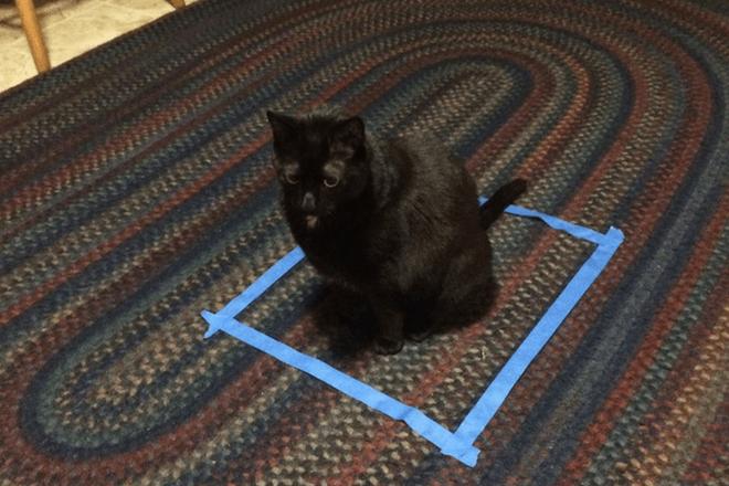 Dán băng dính thành vòng tròn và mèo sẽ ngoan ngoãn ngồi vào không chống cự - tại sao vậy? - Ảnh 2.