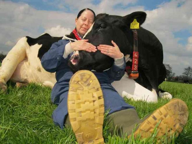 Ôm ấp các chú bò đã trở thành trào lưu và bạn sẽ tốn khoảng 2 triệu đồng cho 1 giờ ôm - Ảnh 2.