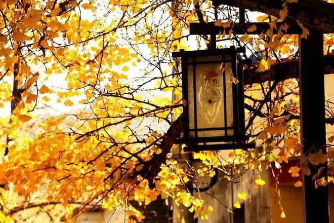 Những ngôi làng cảnh sắc đẹp mê hồn nhất định phải ghé thăm vào mùa thu ở Trung Quốc - Ảnh 16.