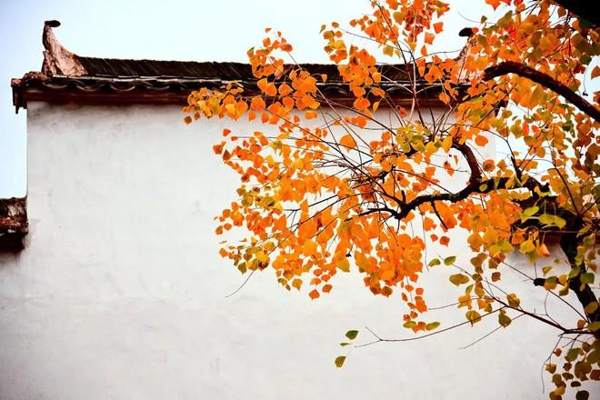 Những ngôi làng cảnh sắc đẹp mê hồn nhất định phải ghé thăm vào mùa thu ở Trung Quốc - Ảnh 2.
