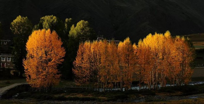 Những ngôi làng cảnh sắc đẹp mê hồn nhất định phải ghé thăm vào mùa thu ở Trung Quốc - Ảnh 10.