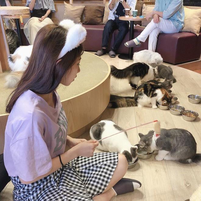 7 điều tuyệt vời ở người Nhật Bản mà ai nghe cũng cảm thấy thán phục, học hỏi ngay từ hôm nay để có cuộc sống hạnh phúc - Ảnh 6.