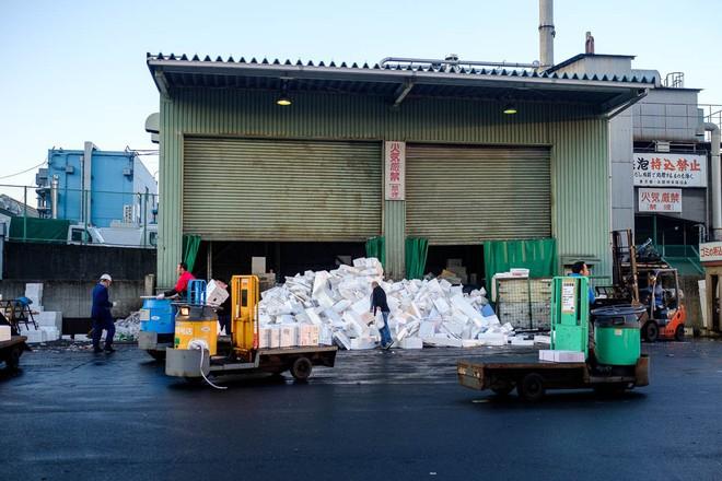 Trong chợ cá lớn nhất thế giới tại Nhật Bản: Mỗi con cá ngừ được bán với giá bằng vài ngôi nhà Nhật Bản - Ảnh 14.