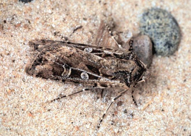 Kỳ lạ sa mạc nhỏ bé nhất thế giới: trông như một cồn cát nhưng vẫn đầy đủ đặc tính của một sa mạc hoàn hảo - Ảnh 6.