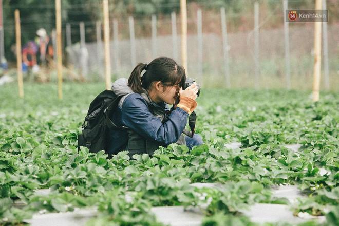 Chimi Farm Hà Nội đang gây sốt các bạn trẻ