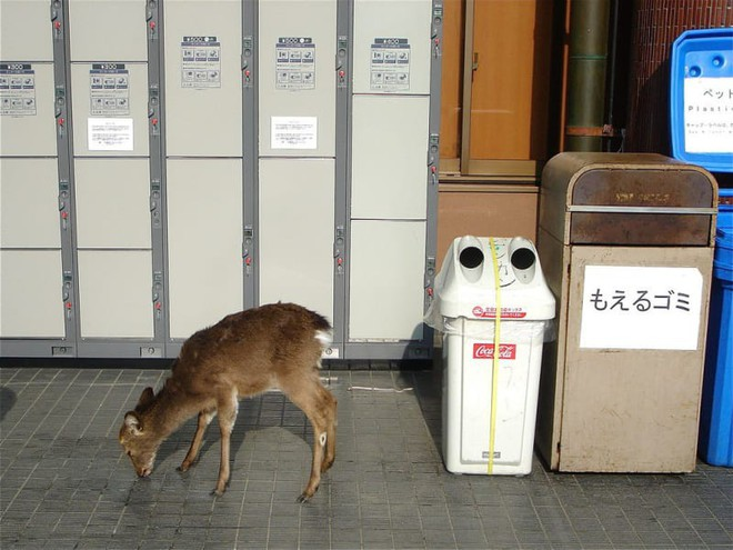 16 điều vừa tiện vừa lạ ở Nhật khiến du khách sành điệu nhất cũng không dám nói mình hiểu hết đất nước này - Ảnh 30.