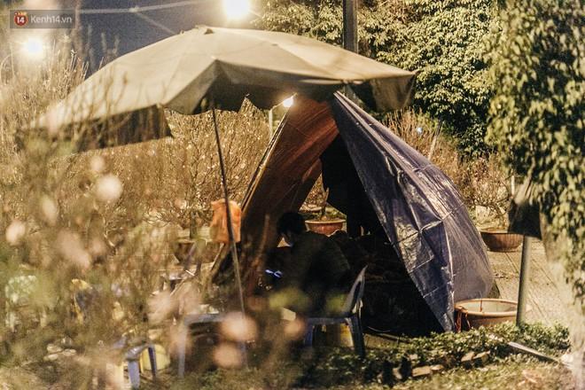 Hà Nội: Người dân dựng lều, trùm chăn canh đào quất cả đêm - Ảnh 6