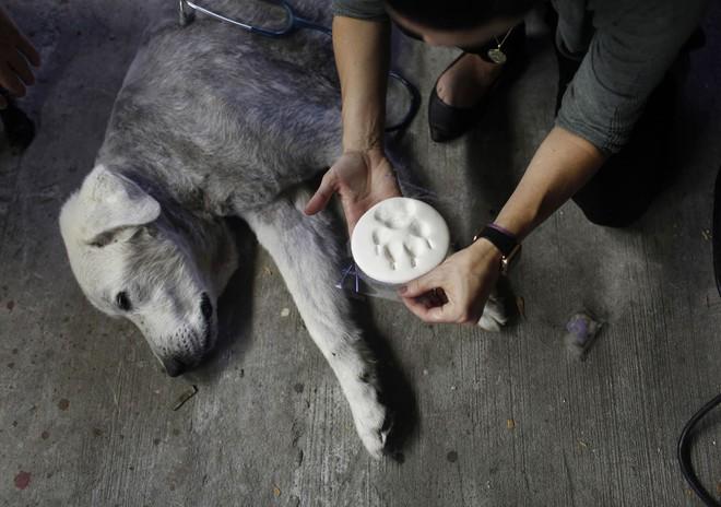 Chùm ảnh: Những khoảnh khắc cuối cùng của chủ nhân và chó mèo cưng trước khi nói lời vĩnh biệt - Ảnh 2.