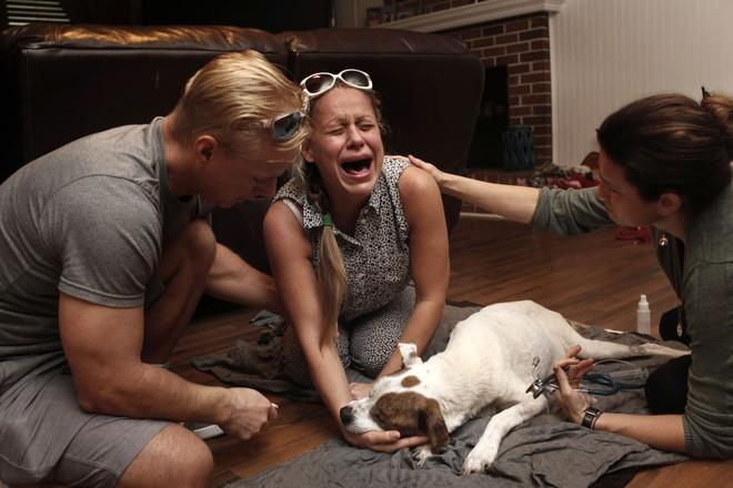 Chùm ảnh: Những khoảnh khắc cuối cùng của chủ nhân và chó mèo cưng trước khi nói lời vĩnh biệt - Ảnh 22.