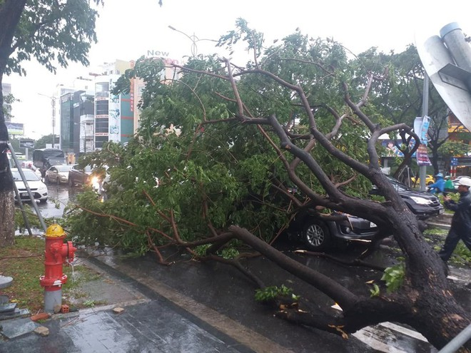 Đà Nẵng: Cây xanh đổ hàng loạt sau bão số 5, nhiều đoạn đường bị ngập khiến giao thông hỗn loạn - Ảnh 6.