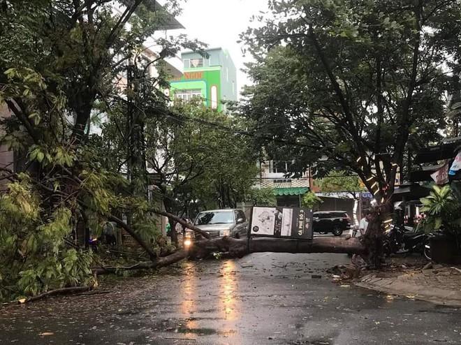 Đà Nẵng: Cây xanh đổ hàng loạt sau bão số 5, nhiều đoạn đường bị ngập khiến giao thông hỗn loạn - Ảnh 4.