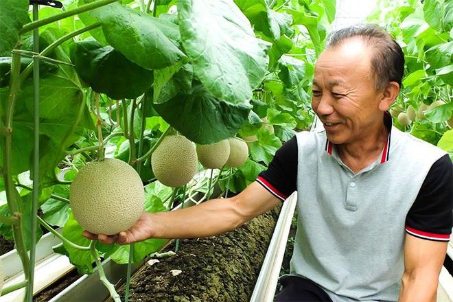 Câu chuyện đằng sau những trái dưa tiền tỉ của Nhật Bản: Căn nguyên từ tình yêu bất diệt của người trồng cây - Ảnh 5.