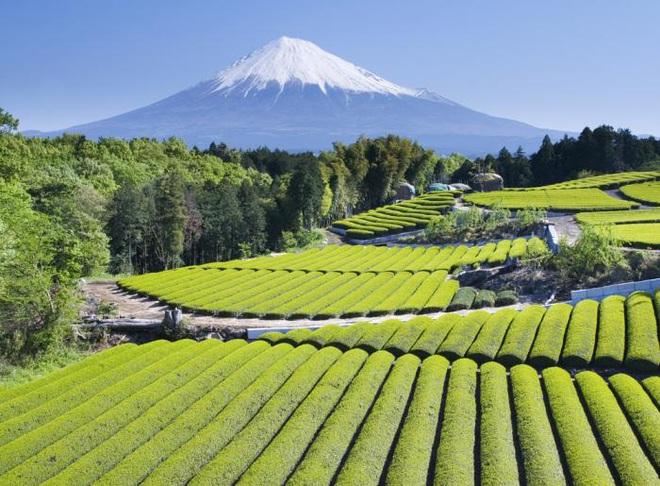Câu chuyện đằng sau những trái dưa tiền tỉ của Nhật Bản: Căn nguyên từ tình yêu bất diệt của người trồng cây - Ảnh 8.