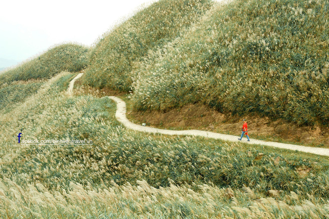 """""""Sống lưng khủng long"""" Bình Liêu đang vào mùa cỏ lau đẹp như một giấc mơ, xem ảnh chỉ biết ôm mộng được đến 1 lần! - Ảnh 13."""