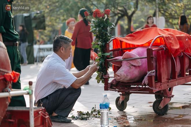 Mỗi năm, 2 hộ dân tại Ném Thượng được lựa chọn nuôi heo từ tháng 8 năm trước để chuẩn bị cho ngày lễ quan trọng đầu xuân. Họ xem đây là vinh dự lớn cho gia đình và dòng tộc.