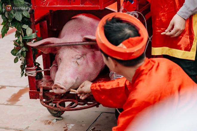 2 gia đình ông Nguyễn Đăng Học (49 tuổi) và Nguyễn Văn Thăng (50 tuổi) cho heo ăn lần cuối. Theo chia sẻ, trong quá trình nuôi, họ không cho lợn ăn cám, chỉ cho ăn rau, bèo và nấu cháo hoa. Việc làm này nhằm mục đích để có được một con lợn sạch mang đi thực hiện nghi lễ
