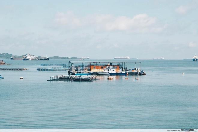 Nghệ thuật xử lý rác ở đất nước siêu sạch Singapore: 90% rác biến thành điện, 10% trở thành đảo du lịch - Ảnh 10.