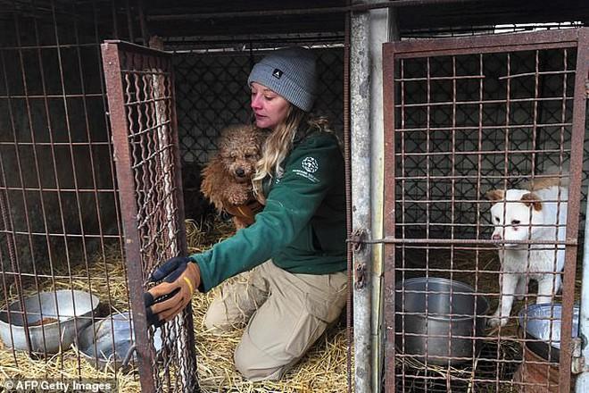 Giải cứu gần 200 con chó tại cơ sở thú cưng kết hợp giết thịt ở Hàn Quốc - Ảnh 3.