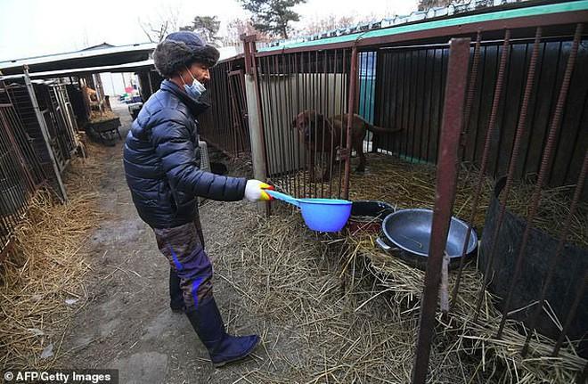 Giải cứu gần 200 con chó tại cơ sở thú cưng kết hợp giết thịt ở Hàn Quốc - Ảnh 2.