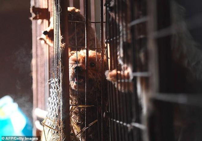 Giải cứu gần 200 con chó tại cơ sở thú cưng kết hợp giết thịt ở Hàn Quốc - Ảnh 1.