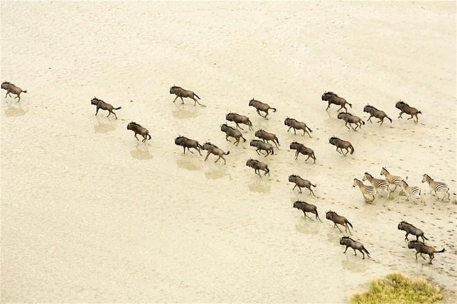 """Choáng với sự sống đẹp huy hoàng tại chảo muối được mệnh danh là """"Vùng đất chết"""" - Ảnh 4."""