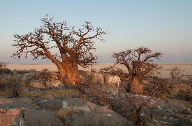 """Choáng với sự sống đẹp huy hoàng tại chảo muối được mệnh danh là """"Vùng đất chết"""" - Ảnh 6."""