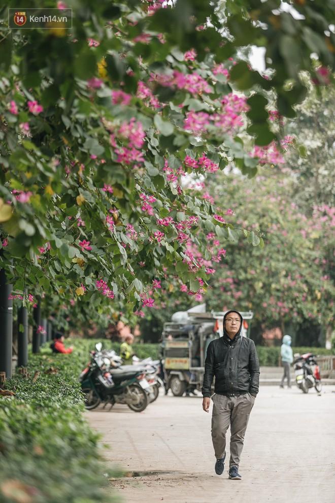 """Không cần lên Tây Bắc, hoa ban vẫn bừng nở giữa đất trời Hà Nội cho người dân thỏa sức """"check-in"""" - Ảnh 6."""