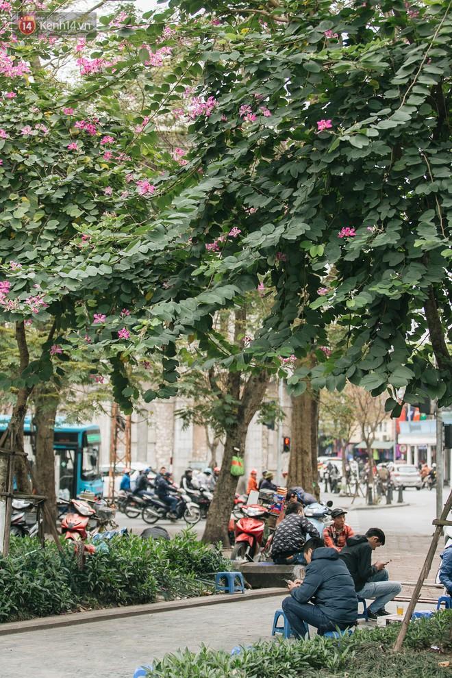 """Không cần lên Tây Bắc, hoa ban vẫn bừng nở giữa đất trời Hà Nội cho người dân thỏa sức """"check-in"""" - Ảnh 8."""