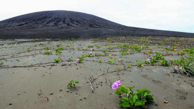 Hòn đảo này chỉ mới ra đời 4 năm trước thôi, vậy mà nay đã khiến giới khoa học phải ngạc nhiên - Ảnh 2.