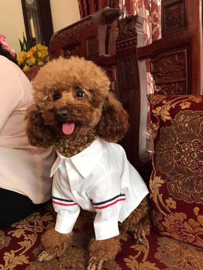Rút cục chiếc áo sơmi quốc dân mà gái trai đều thích, thậm chí còn được may cho... cả chó là gì? - Ảnh 14.