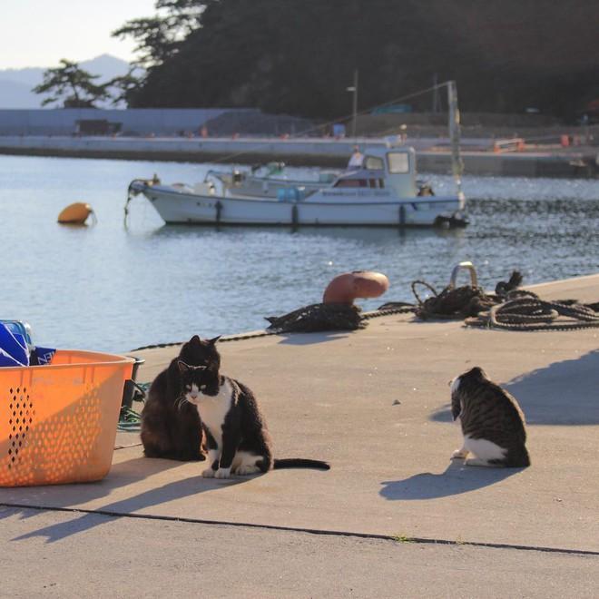 Đến thăm đảo mèo lớn nhất Nhật Bản, hội con sen đến đây thì đảm bảo sướng phát ngất! - Ảnh 11.