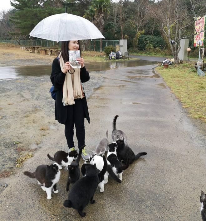 Đến thăm đảo mèo lớn nhất Nhật Bản, hội con sen đến đây thì đảm bảo sướng phát ngất! - Ảnh 5.