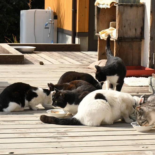 Đến thăm đảo mèo lớn nhất Nhật Bản, hội con sen đến đây thì đảm bảo sướng phát ngất! - Ảnh 4.