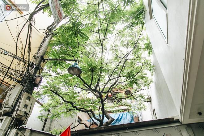 """Hình ảnh người xả rác bừa bãi bị dán chi chít trong khu phố ở Hà Nội: """"Cấm mãi không được chúng tôi mới làm như vậy"""" - Ảnh 7."""