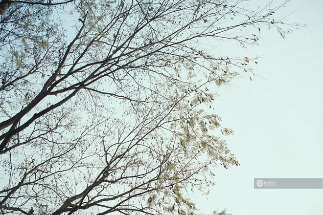 Đây là Hà Nội, của những ngày hoa sưa tinh khôi phủ trắng trời như tuyết - Ảnh 3.