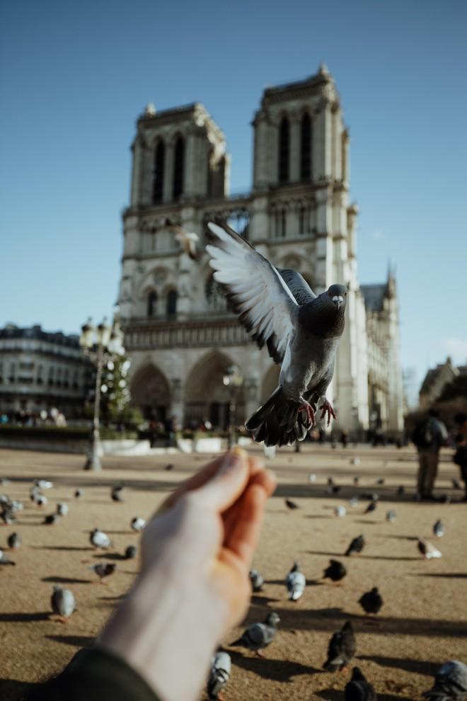 Trước khi sụp đổ một phần vì vụ cháy chấn động, Nhà thờ Đức Bà ở Paris từng là biểu tượng bình yên của cả nước Pháp - Ảnh 9.
