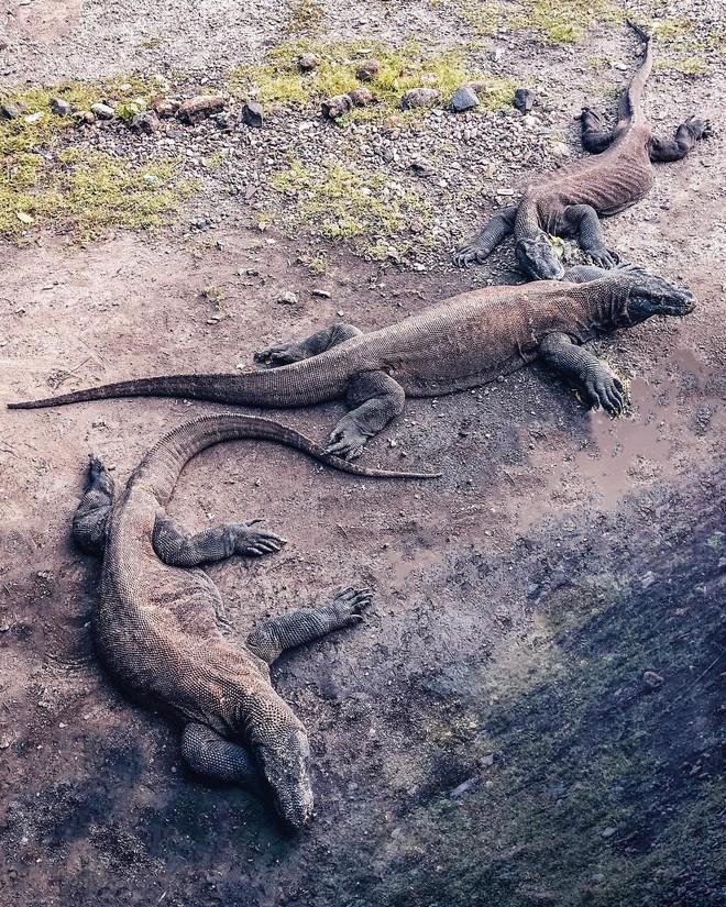 Đảo rồng Komodo tại Indonesia sẽ đóng cửa vào năm 2020, đi ngay trước khi quá muộn nào! - Ảnh 4.
