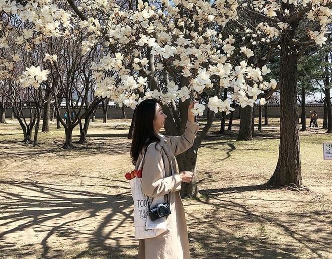 Không phải hoa anh đào, mộc lan mới chính là loài hoa đang vào độ bung nở đẹp nhất tại Seoul - Ảnh 15.