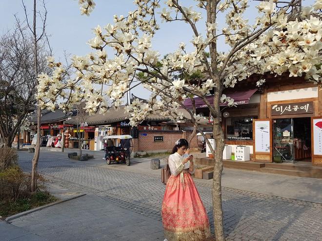 Không phải hoa anh đào, mộc lan mới chính là loài hoa đang vào độ bung nở đẹp nhất tại Seoul - Ảnh 8.