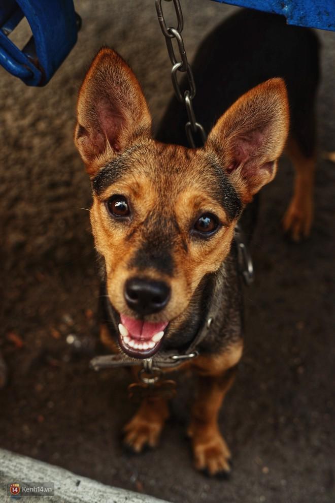"""Tấm bảng """"Chó là bạn, không phải thứ ăn"""" của người đàn ông 20 năm bầu bạn với những chú chó ngoài đường phố Sài Gòn - Ảnh 2."""