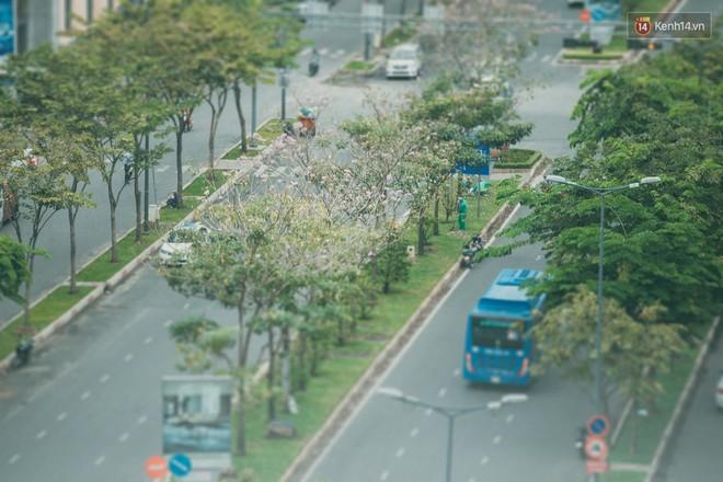 Sài Gòn mùa hoa kèn hồng: dịu dàng và dễ thương đến lạ! - Ảnh 7.