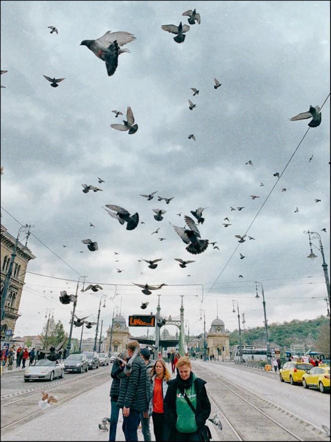 Theo chân anh bạn điển trai người Việt khám phá Budapest - thủ đô nổi tiếng đẹp như phim điện ảnh của Hungary - Ảnh 6.