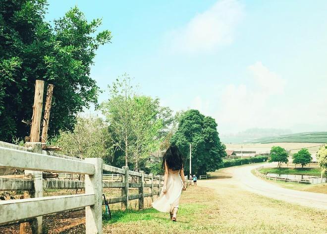 Đã tìm ra toạ độ của trang trại đẹp tựa trời Âu khiến giới trẻ thi nhau đến check-in rần rần - Ảnh 5.